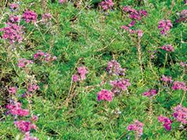 四季おりおりに咲く江坂公園の花