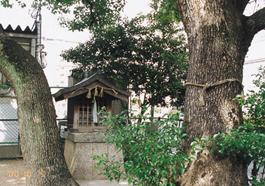 建物の間で大木に守られるように鎮座しています