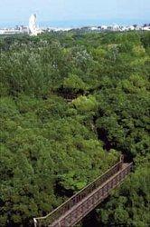 万博記念公園 ソラード(森の空中観察路)